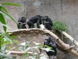 <h5>Zoo</h5>